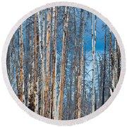 Scarred Pines Yellowstone Round Beach Towel by Steve Gadomski