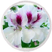 Scented Geraniums 2 Round Beach Towel