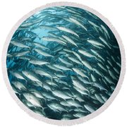 School Of Jacks, Indonesia Round Beach Towel