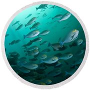 School Of Yellow Masked Surgeonfish Round Beach Towel