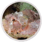 Scorpionfish, Indonesia Round Beach Towel