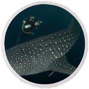 Scuba Diver And Whale Shark, Papua Round Beach Towel