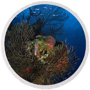 Sea Fan Seascape, Belize Round Beach Towel