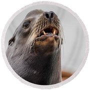 Sea Lion And Yellow Fangs Round Beach Towel
