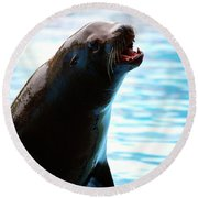 Sea-lion Round Beach Towel