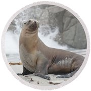 Sea Lion Monterey Round Beach Towel