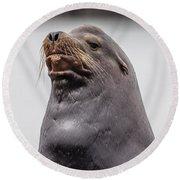 Sea Lion Satisfaction Round Beach Towel