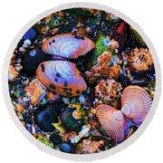 Sea Shells Sea Life Round Beach Towel