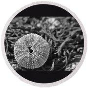 Sea Urchin On Seaweed Round Beach Towel by David Rucker
