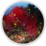 Sea Whips And Soft Coral, Fiji Round Beach Towel