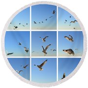 Seagull Collage 2 Round Beach Towel