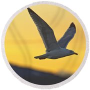 Seagull Flying At Dusk With Sunset Round Beach Towel