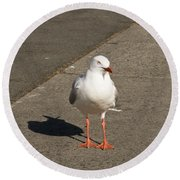 Seagull In The Summer Sun Round Beach Towel by Ulrich Schade