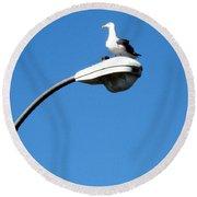 Seagull On Street Light Round Beach Towel