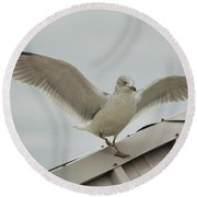 Seagull With Character Round Beach Towel