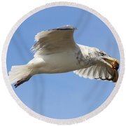 Seagull With Snail Round Beach Towel