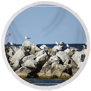 Seaguls On Boulders In Lake Erie Round Beach Towel