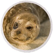 Seal 1 Round Beach Towel