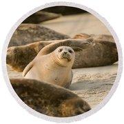 Seal 4 Round Beach Towel