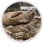 Seal Old Timers Round Beach Towel