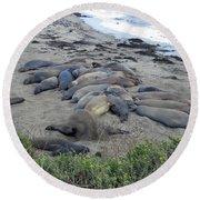Seal Spa. Sand Bath Round Beach Towel