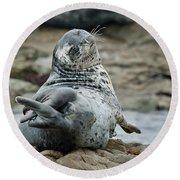 Seal Stretch Round Beach Towel