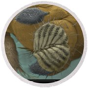 Sem Of A Fruit Fly Mouth Round Beach Towel