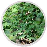 Shadows Of The Sweet Gum Round Beach Towel