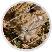 Sheep 1 Round Beach Towel