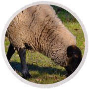 Sheep 3 Round Beach Towel