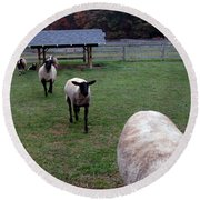 Sheep Feed Time Round Beach Towel