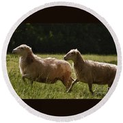 Sheep On The Move Round Beach Towel