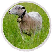 Sheep With A Bell Round Beach Towel