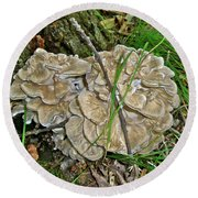 Shelf Fungus - Grifola Frondosa Round Beach Towel
