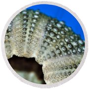 Shell With Pimples 2 Round Beach Towel