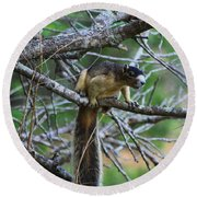 Shermans Fox Squirrel Round Beach Towel