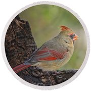 Shes An Early Bird  New Version Round Beach Towel