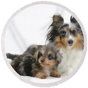 Shetland Sheepdog With Pup Round Beach Towel