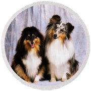 Shetland Sheepdogs Portrait Of Two Dogs Round Beach Towel