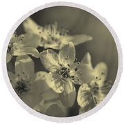 Shimmering Callery Pear Blossoms Round Beach Towel