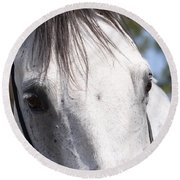 Show Horse At Mule Days Round Beach Towel