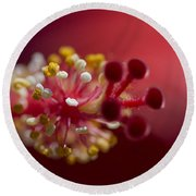 Showy Tropical Vibrant Red Hibiscus Pistil Round Beach Towel
