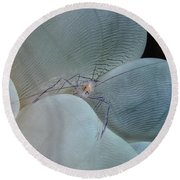 Shrimp On Bubble Coral, Indonesia Round Beach Towel