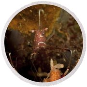 Shrimp With Legs And Claws Spread Wide Round Beach Towel