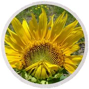Shy Sunflower Round Beach Towel
