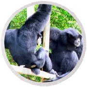 Siamang Gibbons Round Beach Towel