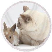 Siamese-cross Cat, Isaac, And Baby Round Beach Towel