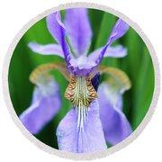 Siberian Iris Flower Round Beach Towel