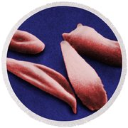 Sickle Red Blood Cells Round Beach Towel