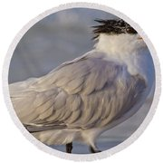 Siesta Key Royal Tern Round Beach Towel